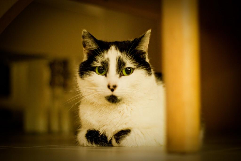 Mit dem Canon EF 50mm f/1.4 USM aufgenommene Katze