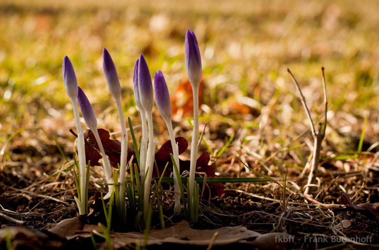 Der Frühling steht vor der Tür - hoffentlich!