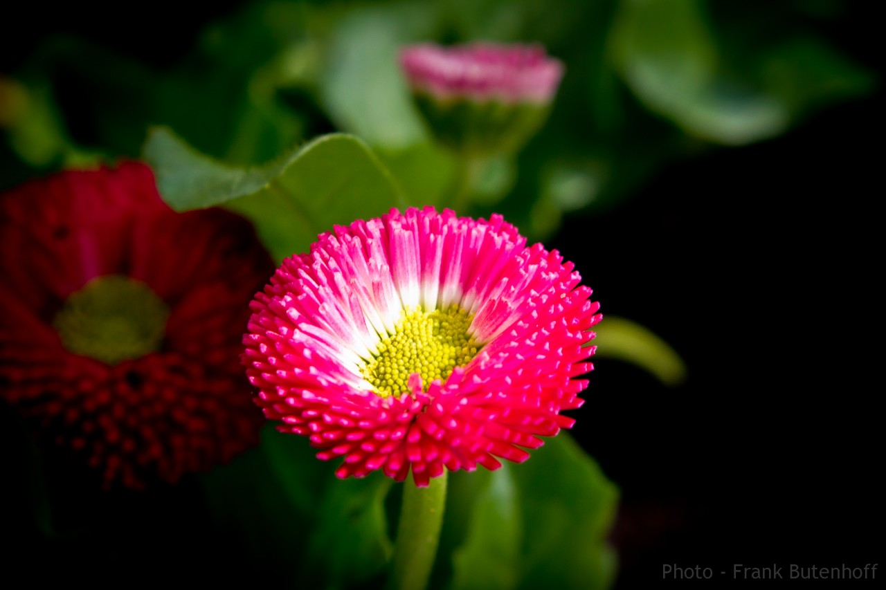 Blumen-Fruehlin