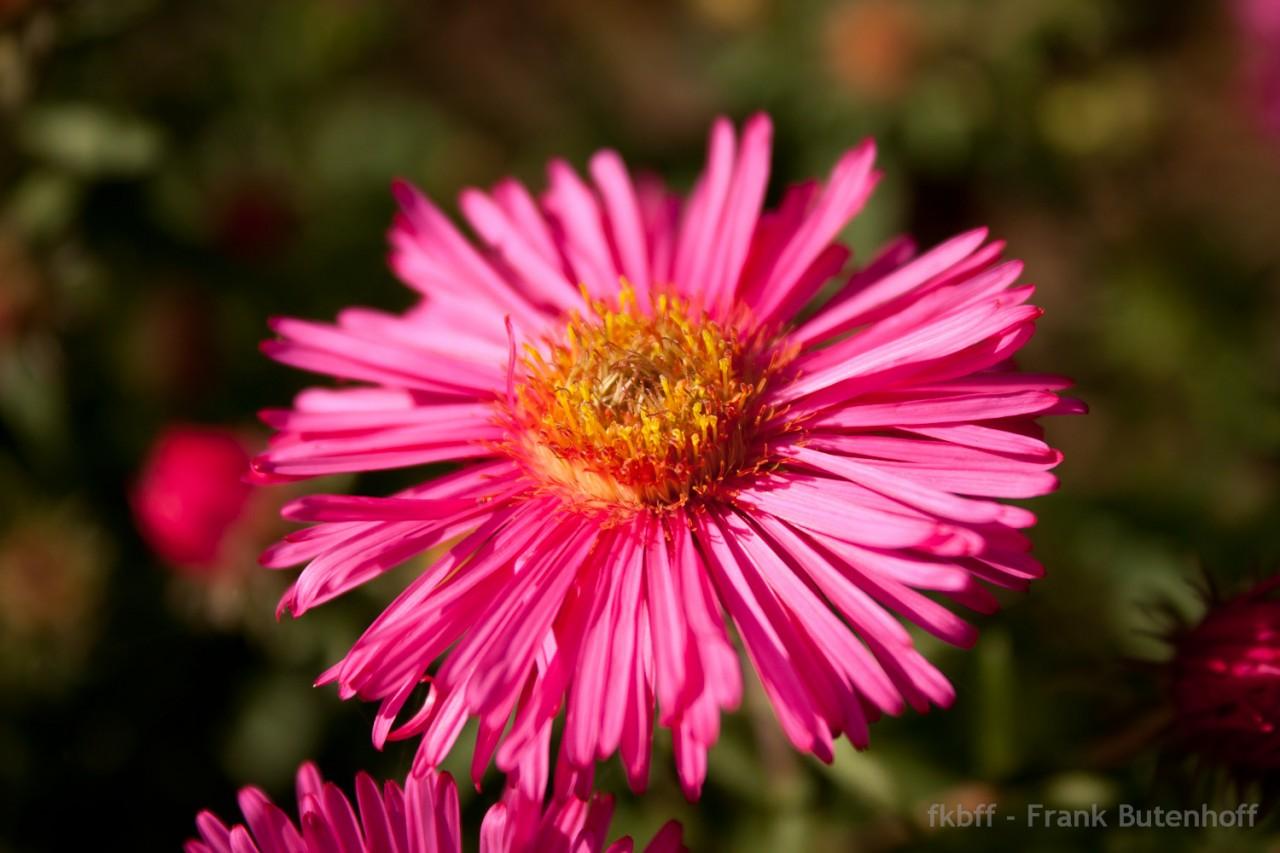 Blume, Blüte