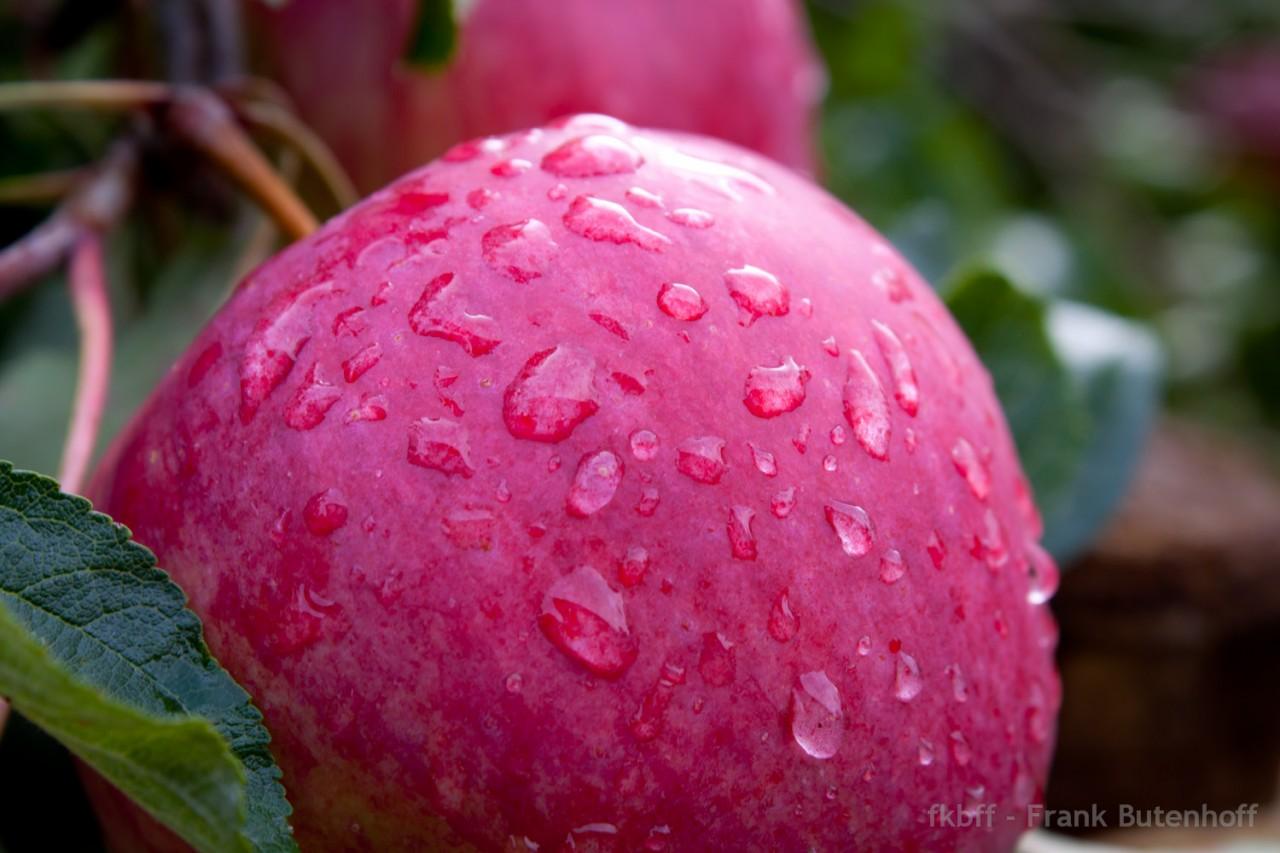 Ein roter Apfel mit Wassertropfen