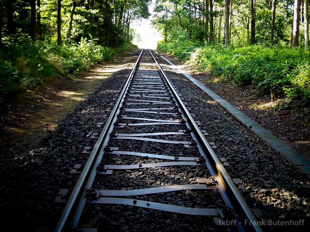 Bahnschienen im Wald