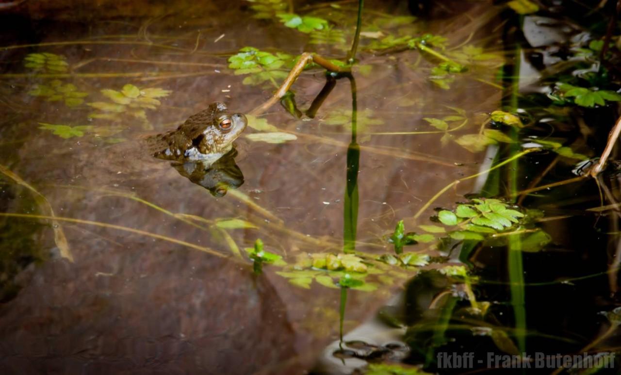 Der erste Konzertmeister im Teich