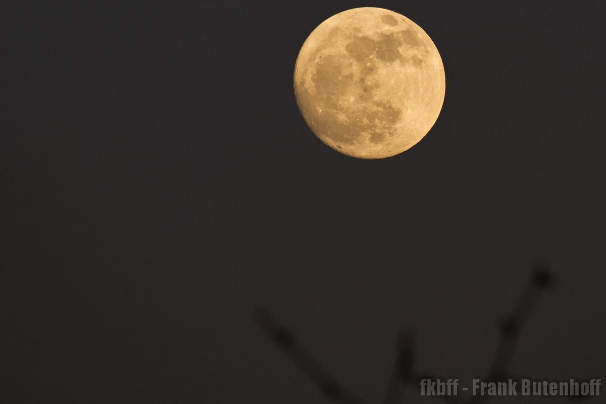 Mond im Frühling