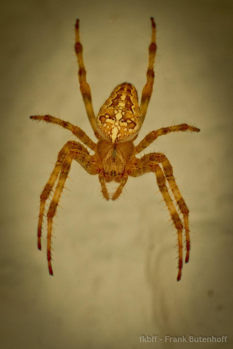 spider2013